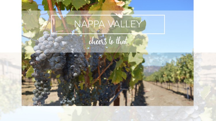 Nappa Valley, blue grapes on a sunny day.