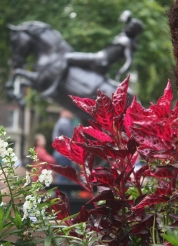 A-dazzling-journey-london-soho-square-garden-flower